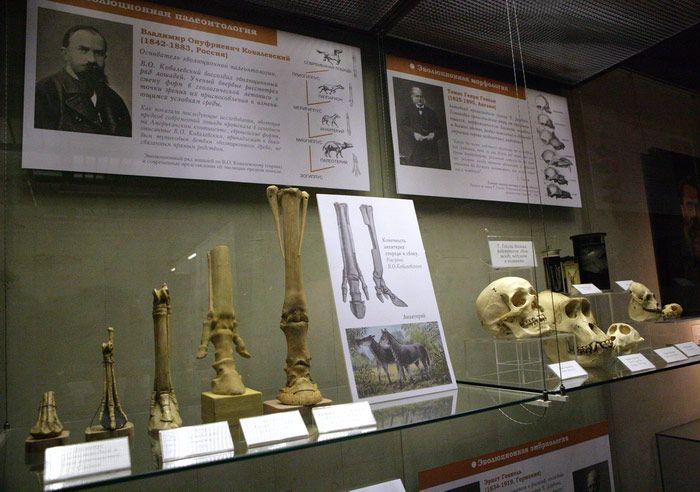 Постоянная экспозиция Дарвиновского музея «Этапы познания живой природы» фото 6