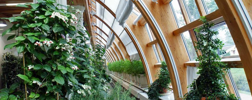 Постоянная экспозиция Царицынских оранжерей «Страна запахов и вкусов» фото 2