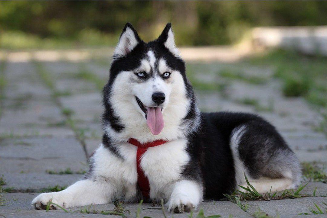 собак екатеринбург выставки фото