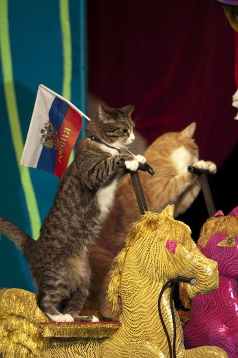 картинки кот в театре была гибель