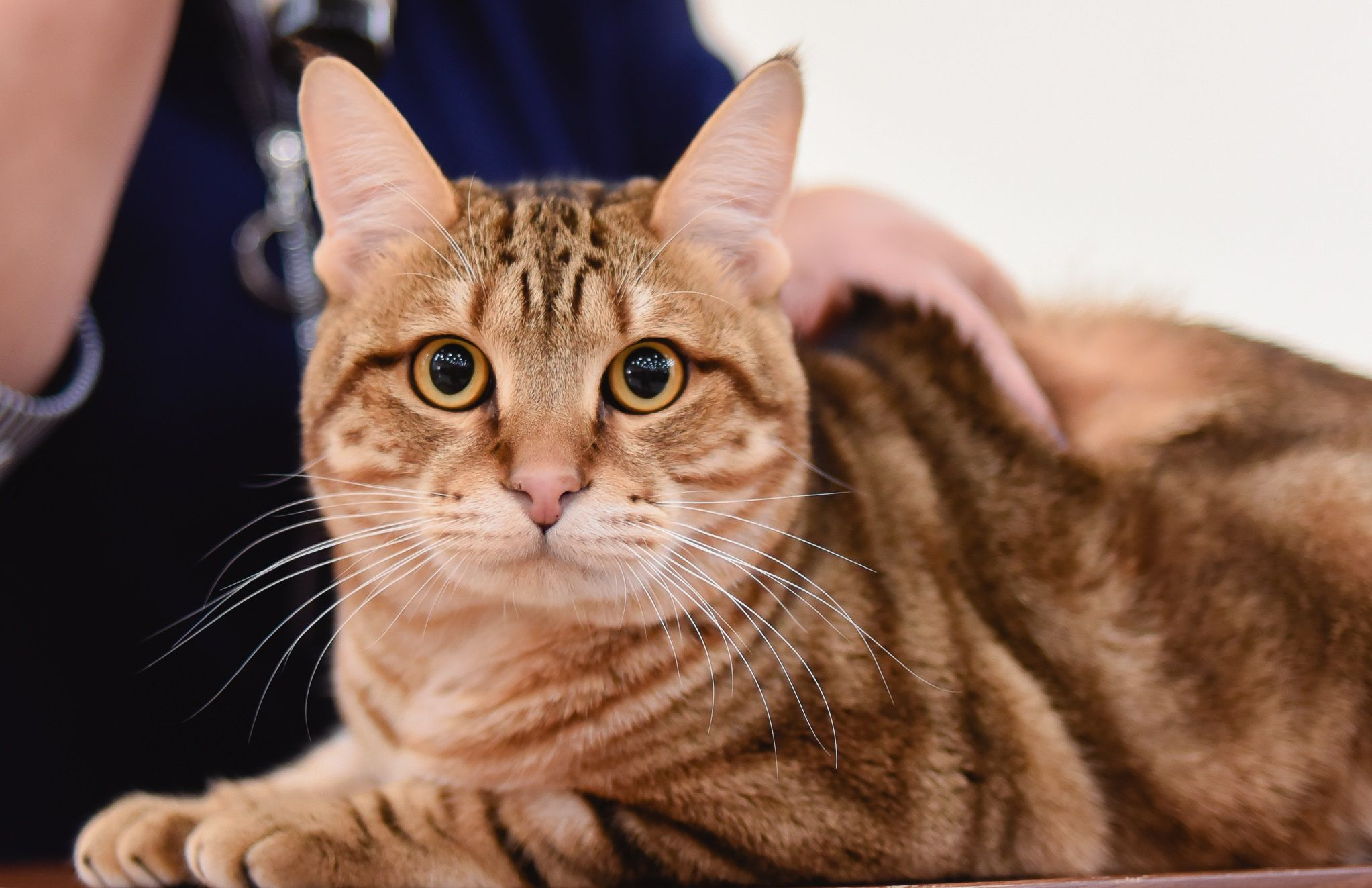 Международная выставка кошек «У Лукоморья»