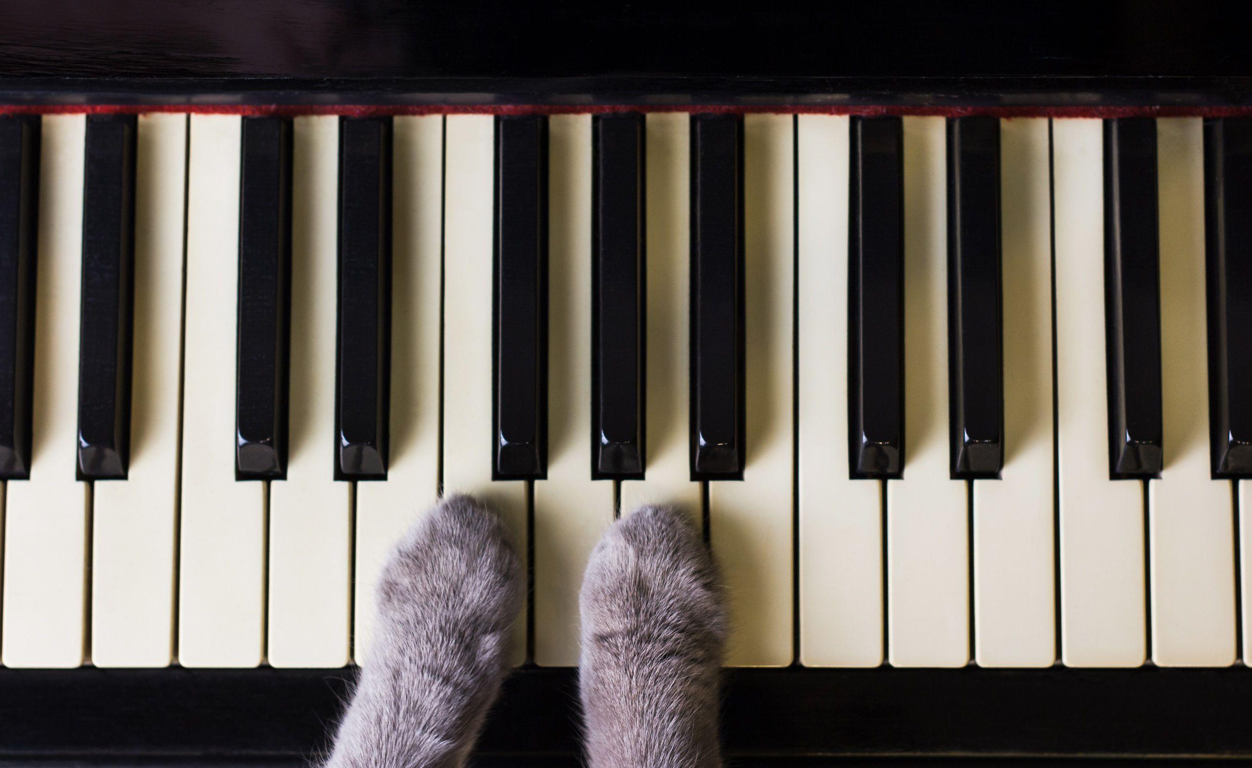 Концерты Piano & Cats фото 5