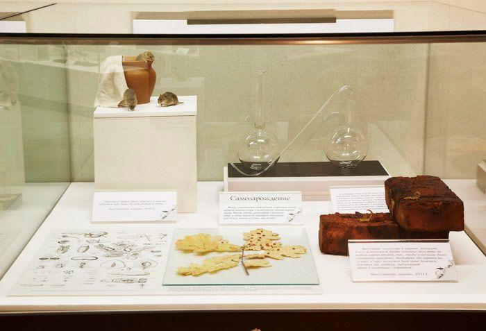 Постоянная экспозиция Дарвиновского музея «Этапы познания живой природы» фото 4