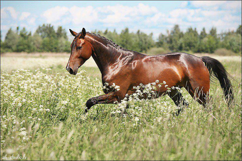 Прогулки на лошадях от конного двора «Хутор» со скидкой до 66% фото 4