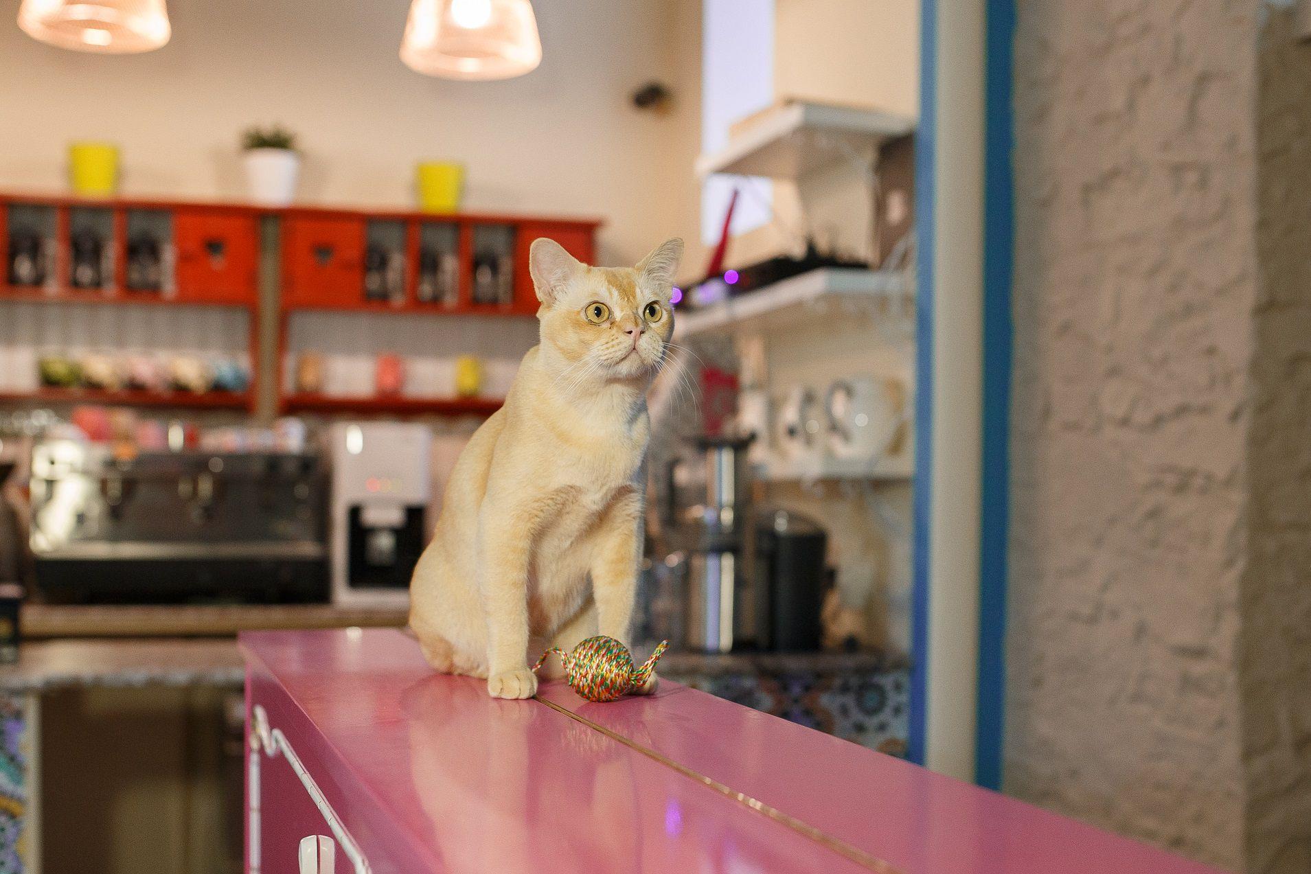 Концерты Piano & Cats фото 7