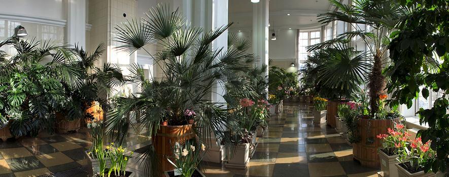 Постоянная экспозиция Царицынских оранжерей «Зимний сад императрицы» фото 1