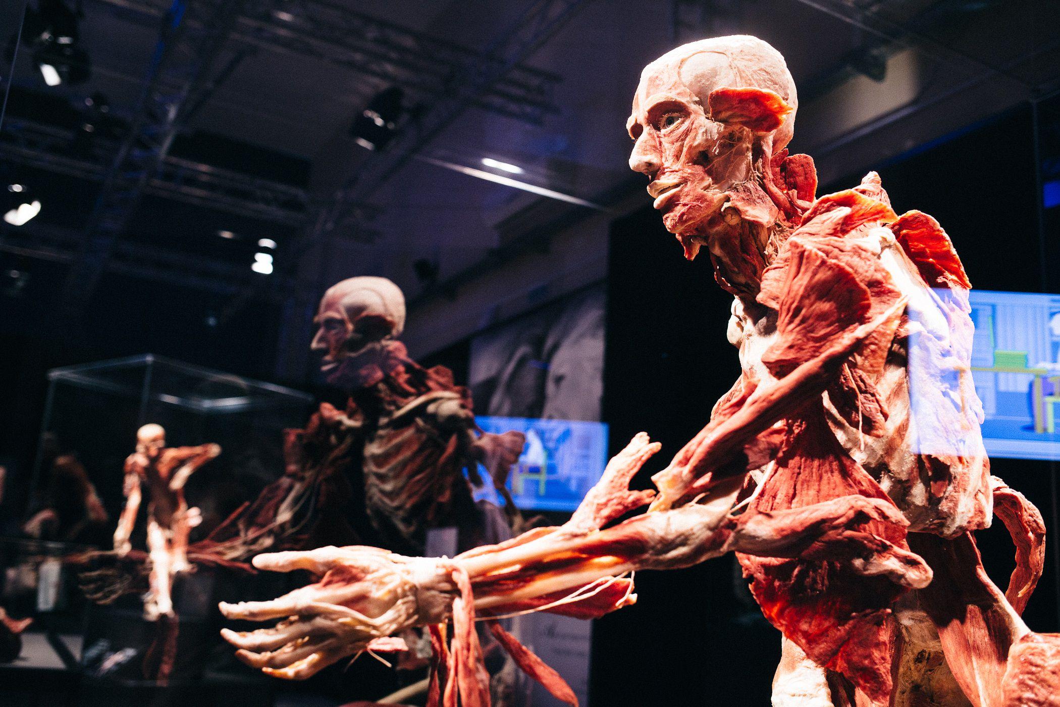 Выставка «Body Worlds. Мир тела» фото 2