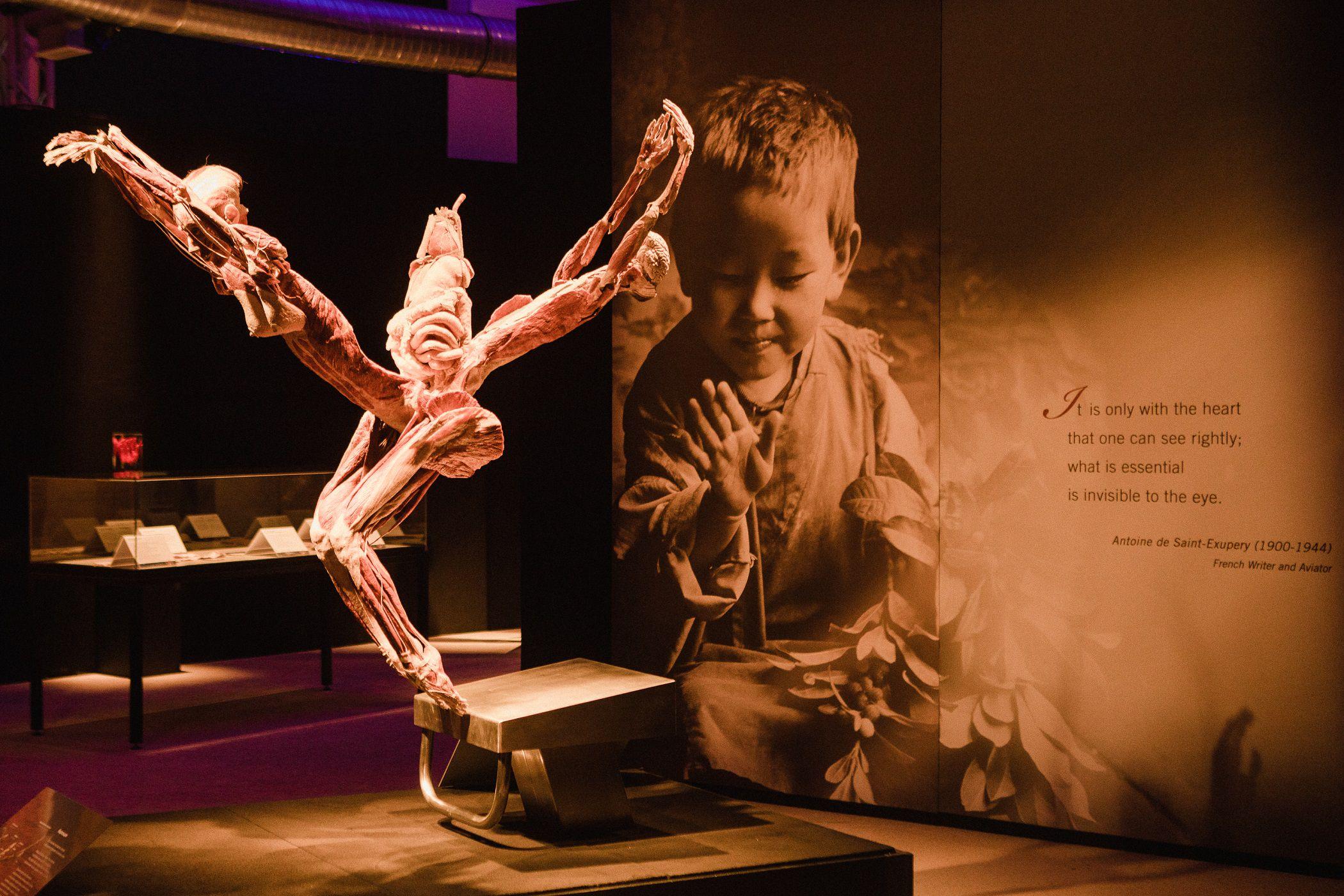 Выставка «Body Worlds. Мир тела» фото 1
