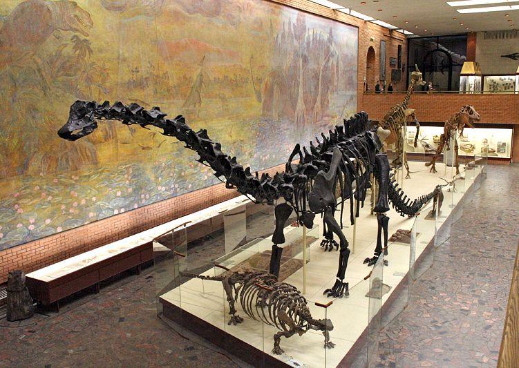 Постоянная экспозиция Палеонтологического музея фото 5