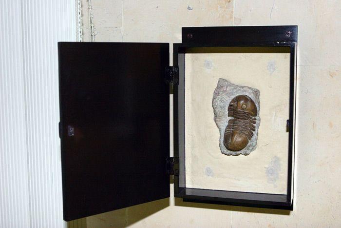 Постоянная экспозиция Дарвиновского музея «Развитие органического мира» фото 4