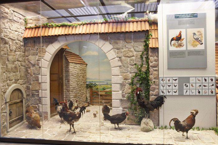 Постоянная экспозиция Дарвиновского музея «Этапы познания живой природы» фото 3