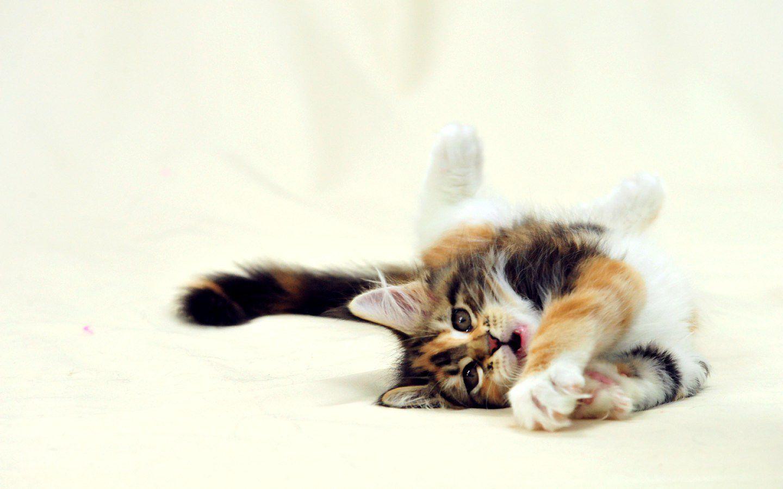Котенок на плече  № 1126970 загрузить