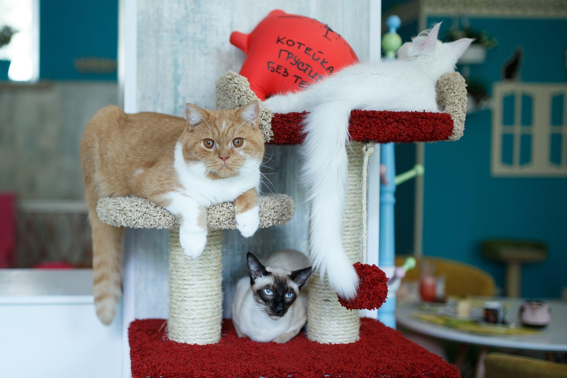 Концерты Piano & Cats фото 4