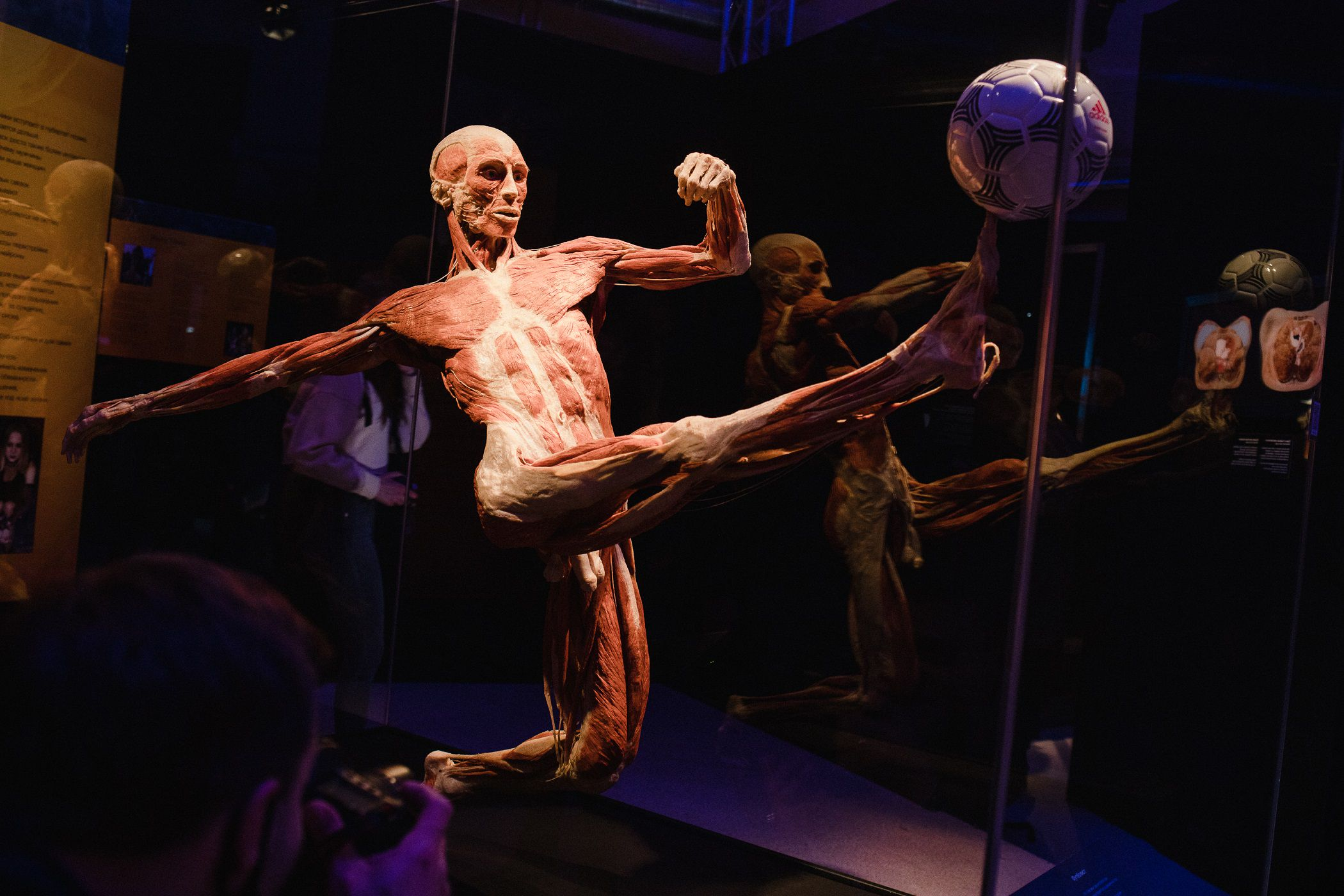 Выставка «Body Worlds. Мир тела» фото 3