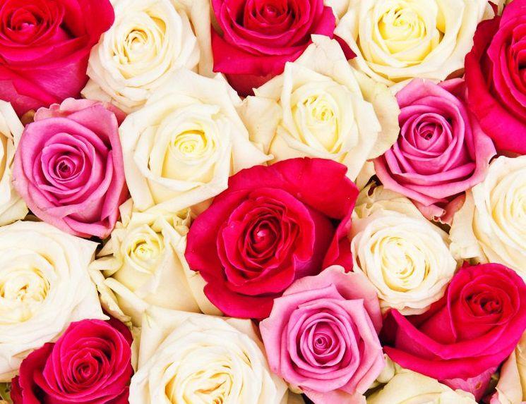 Букеты роз в шляпной коробке от компании «Букет элит» со скидкой до 63% фото 1