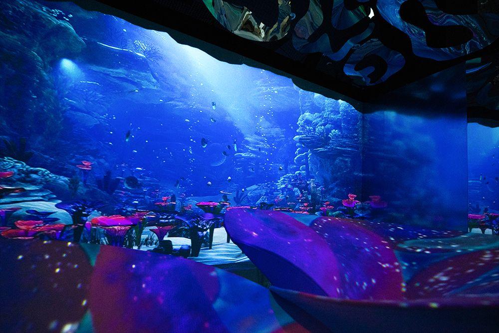 Интерактивная мультимедийная выставка «Океан юрского периода» в «Москвариуме»