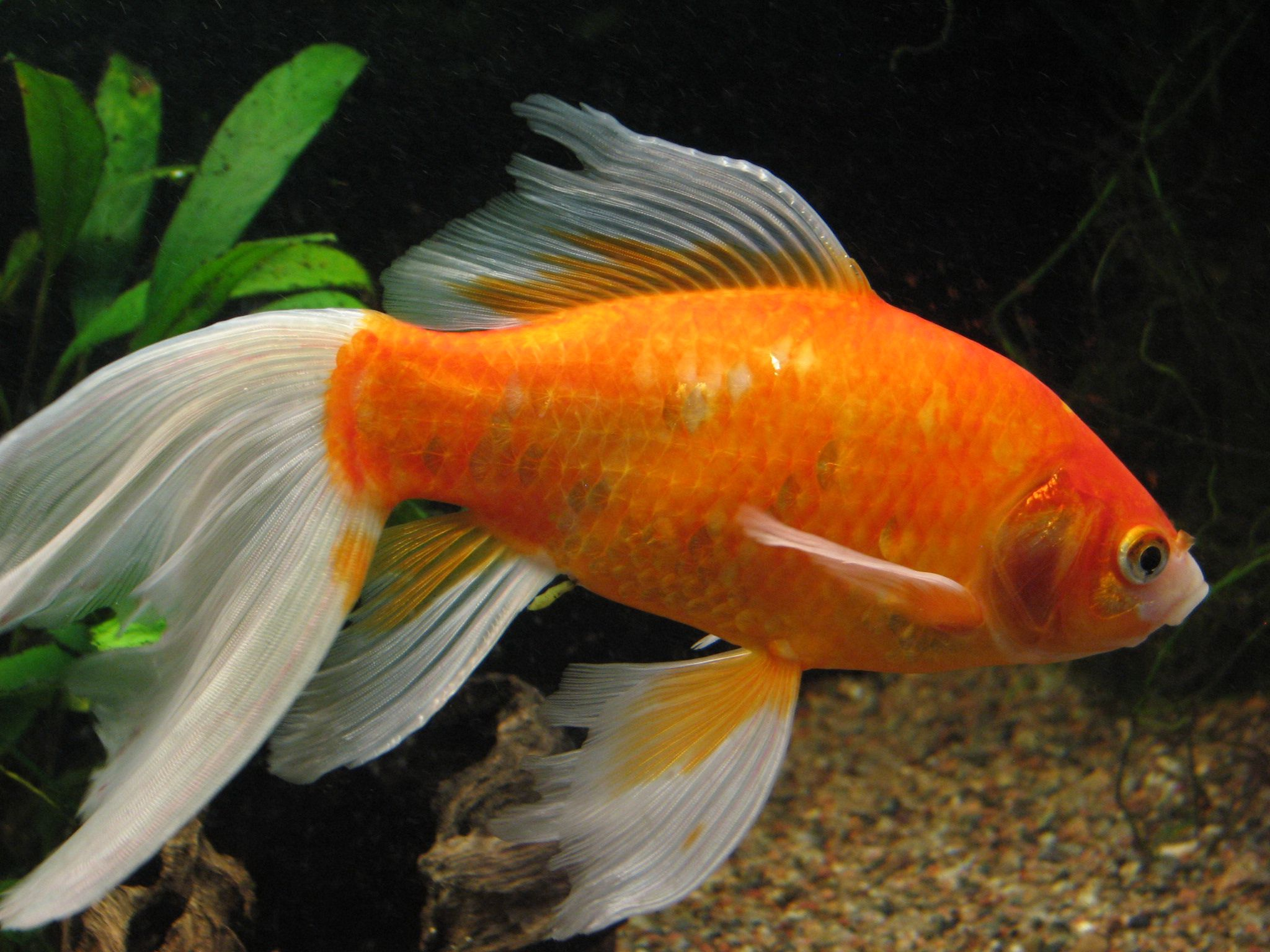 Выставка аквариумных рыб и растений