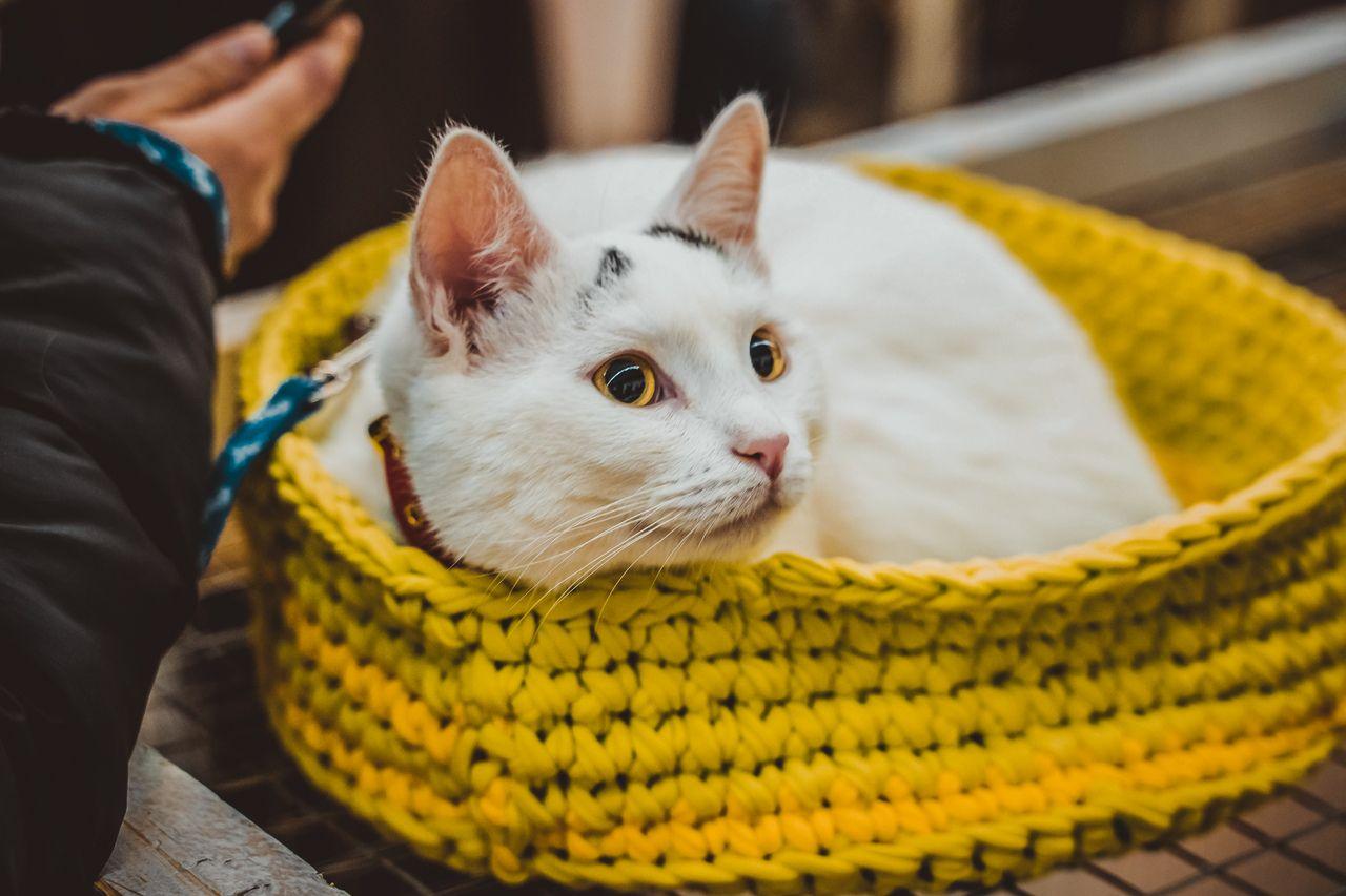 Выставка-пристройство животных из приютов в ТЦ «Капитолий»