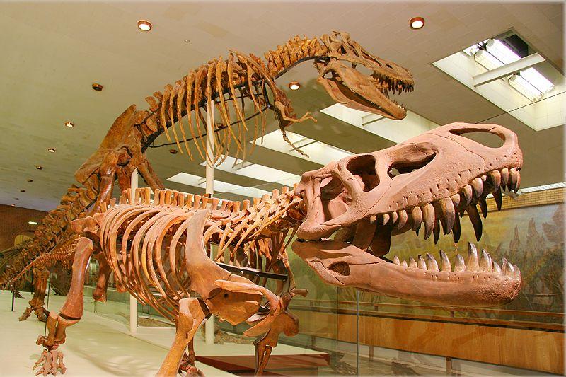 Постоянная экспозиция Палеонтологического музея фото 1