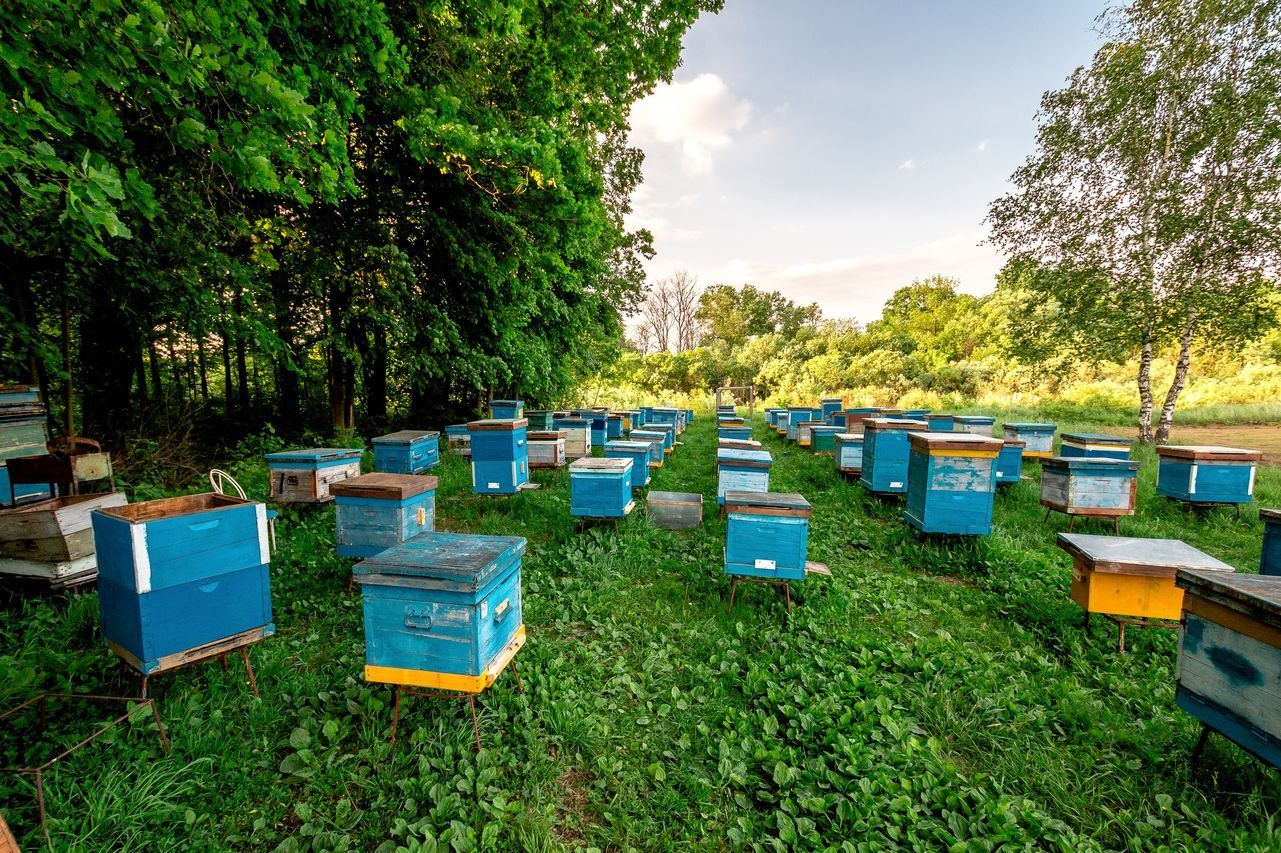 Квест по московским пасекам «Пчелиная девятина» фото 1