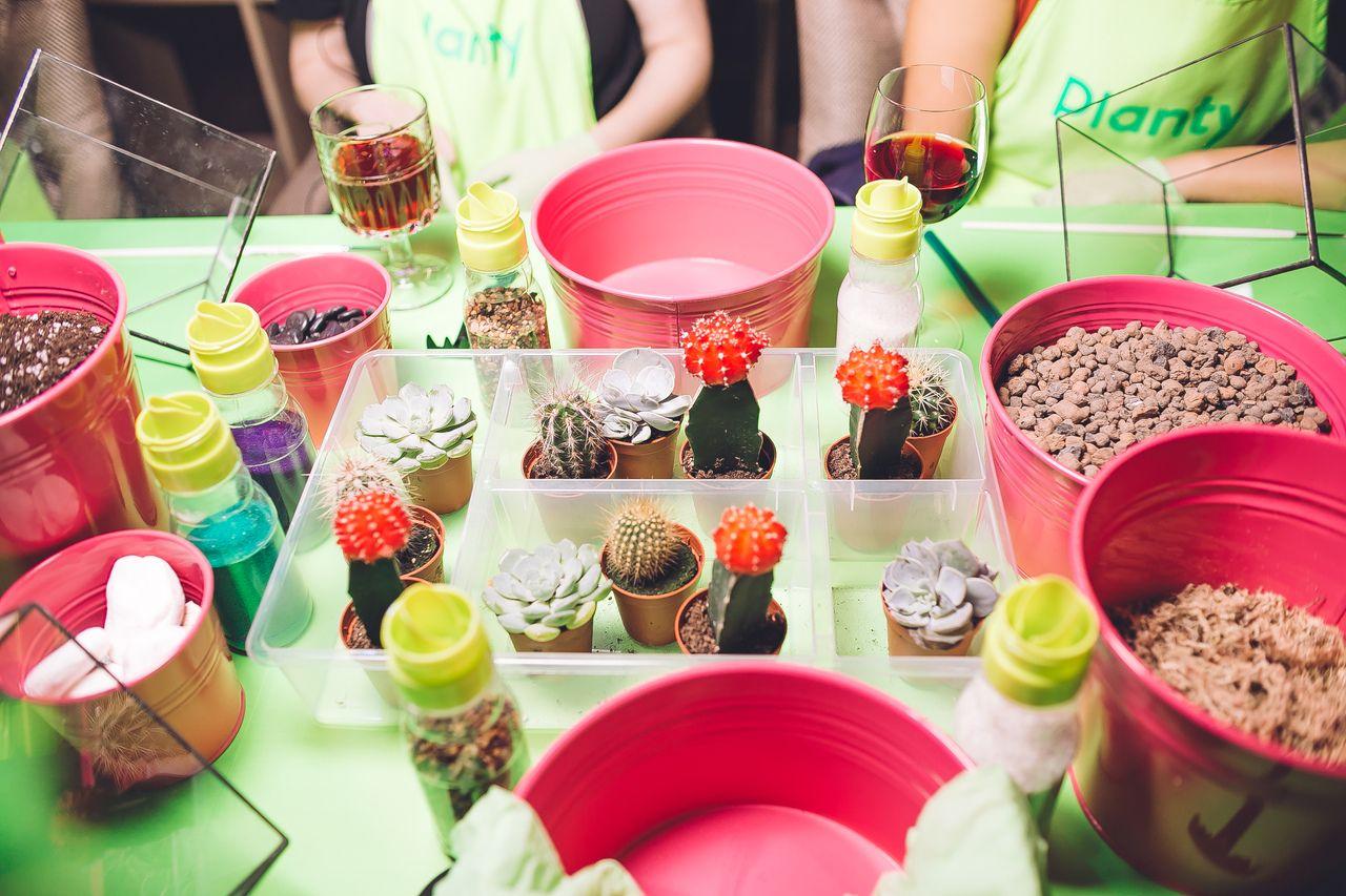Вечеринки с растениями Planty офлайн и онлайн фото 4