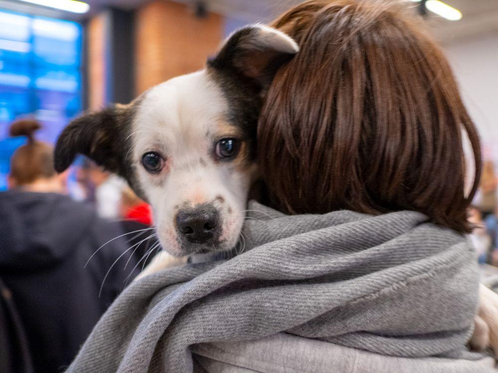 Двухдневный благотворительный фестиваль «Собаки, которые любят» фото 1