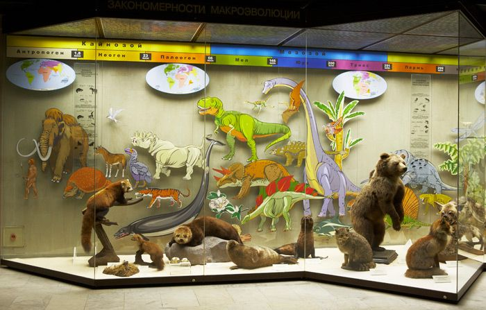 Постоянная экспозиция Дарвиновского музея «Развитие органического мира» фото 1