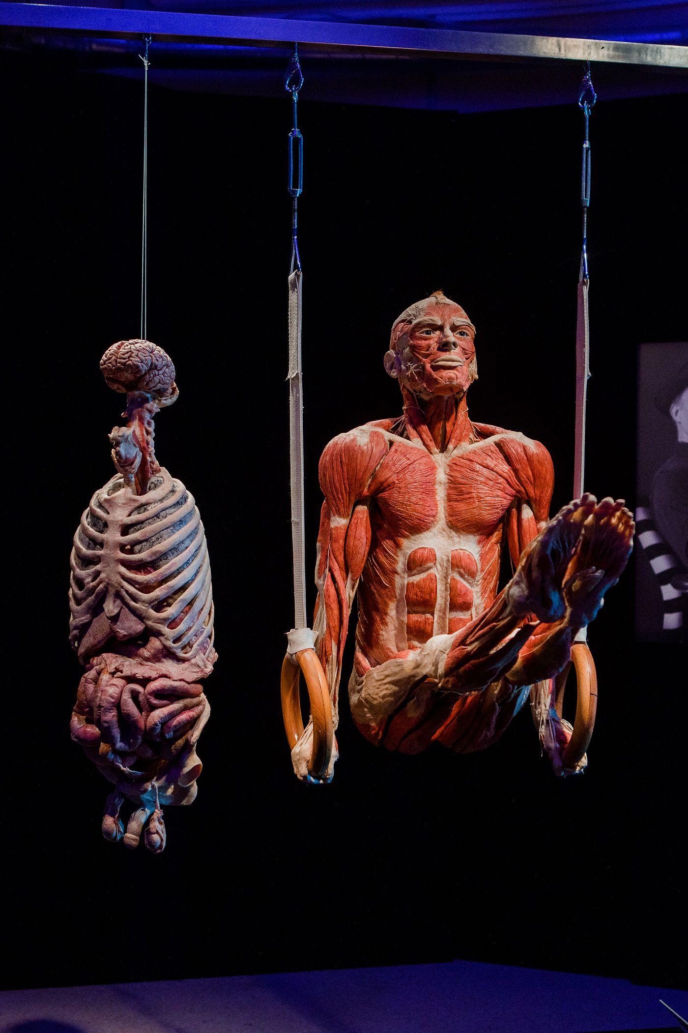 Выставка «Body Worlds. Мир тела» фото 5