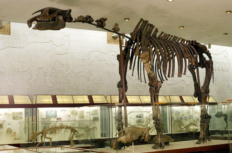 Постоянная экспозиция Палеонтологического музея фото 4