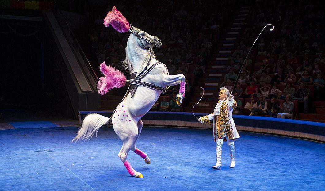 своеобразный картинки артисты цирка животные новом