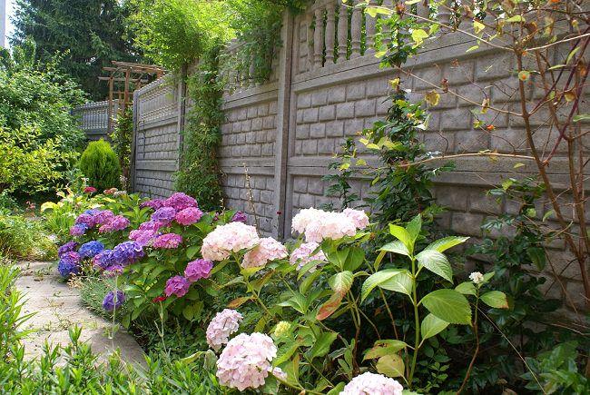 American Hydrangea Societys 22 Annual Garden Tour Atlanta