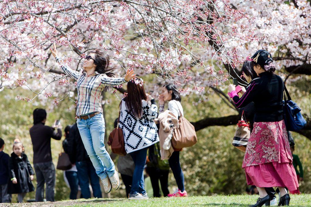 Cherry blossom festival date 2015