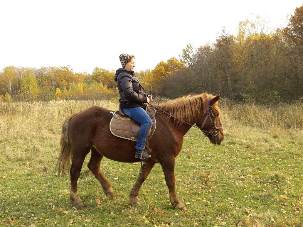 Прогулки на лошадях от конного двора «Хутор» со скидкой до 66% фото 1