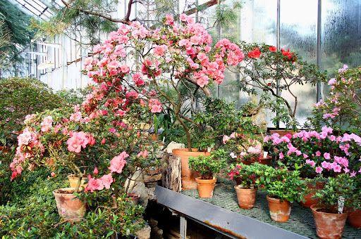 Виртуальный тур по пряничному Ботаническому саду фото 2