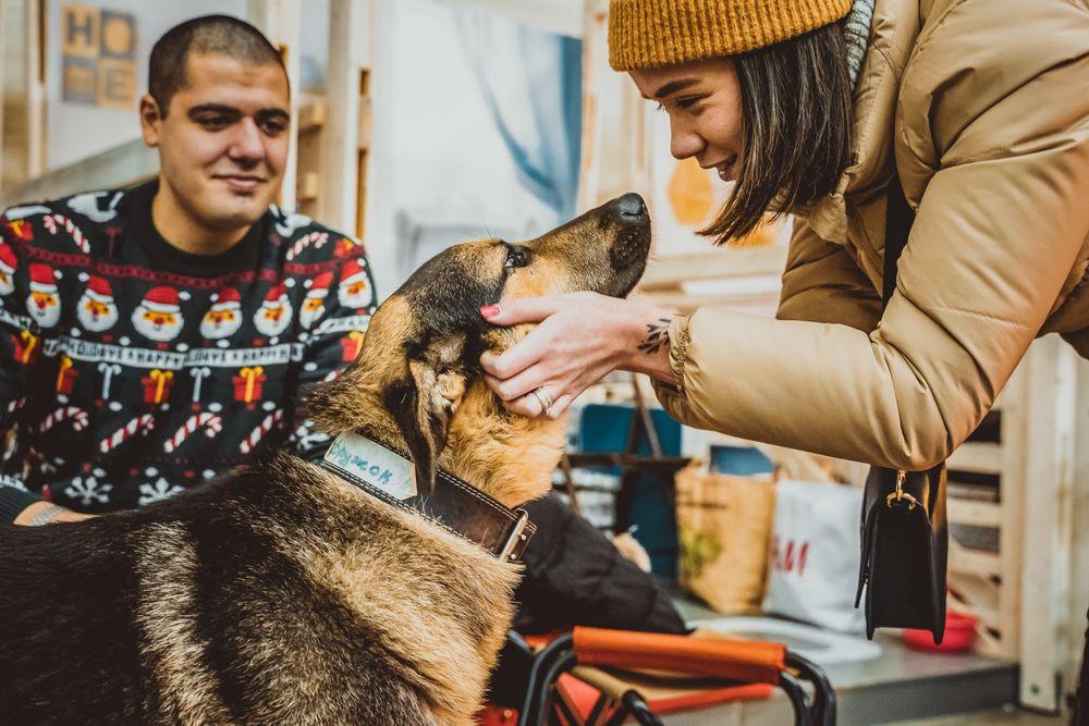 Выставка-пристройство собак и кошек из приютов «Юна-Фест»