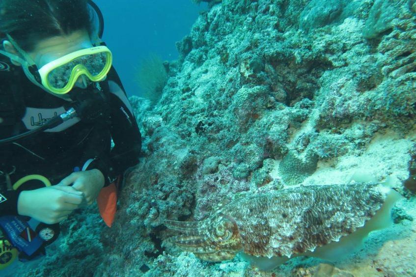 Начальный курс дайвинга Open Water Diver фото 2