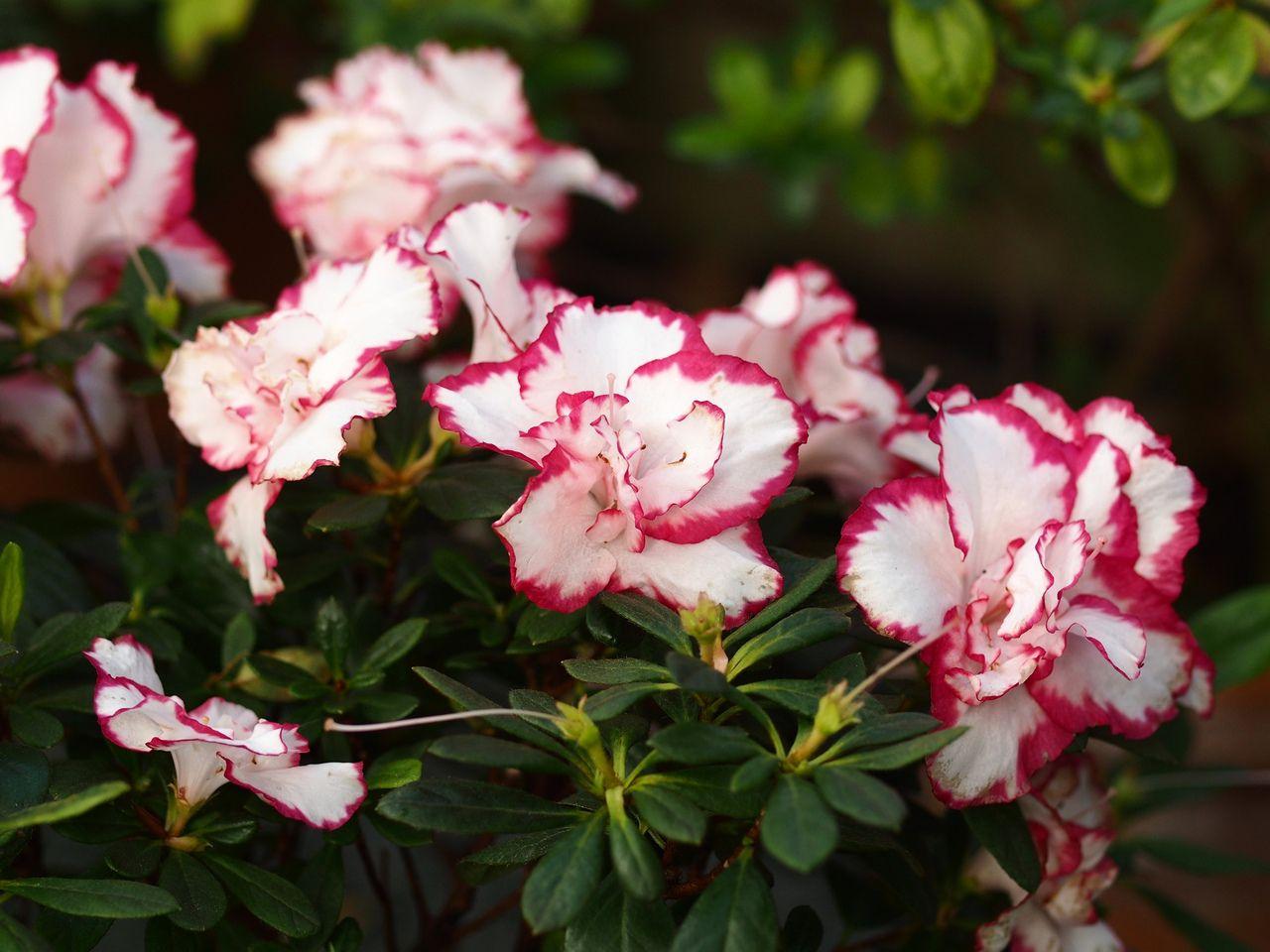 Онлайн-прогулки по Ботаническому саду фото 3