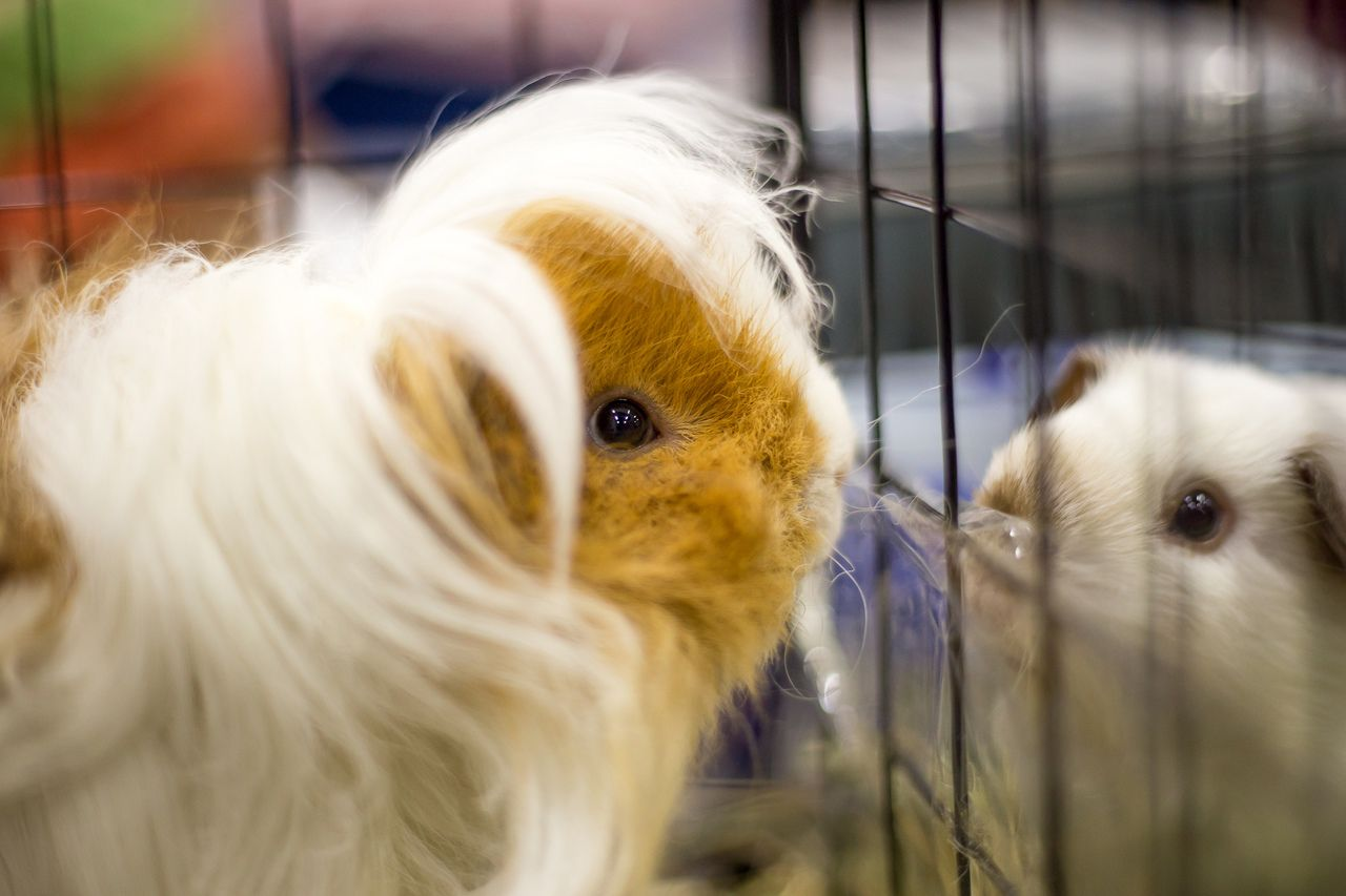 Выставка домашних животных «Усатые звёзды» фото 1