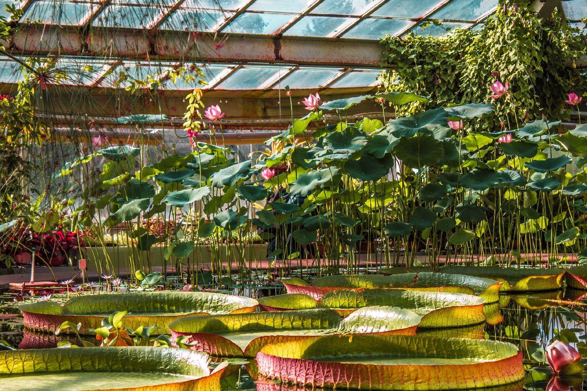 Виртуальный тур по пряничному Ботаническому саду фото 1