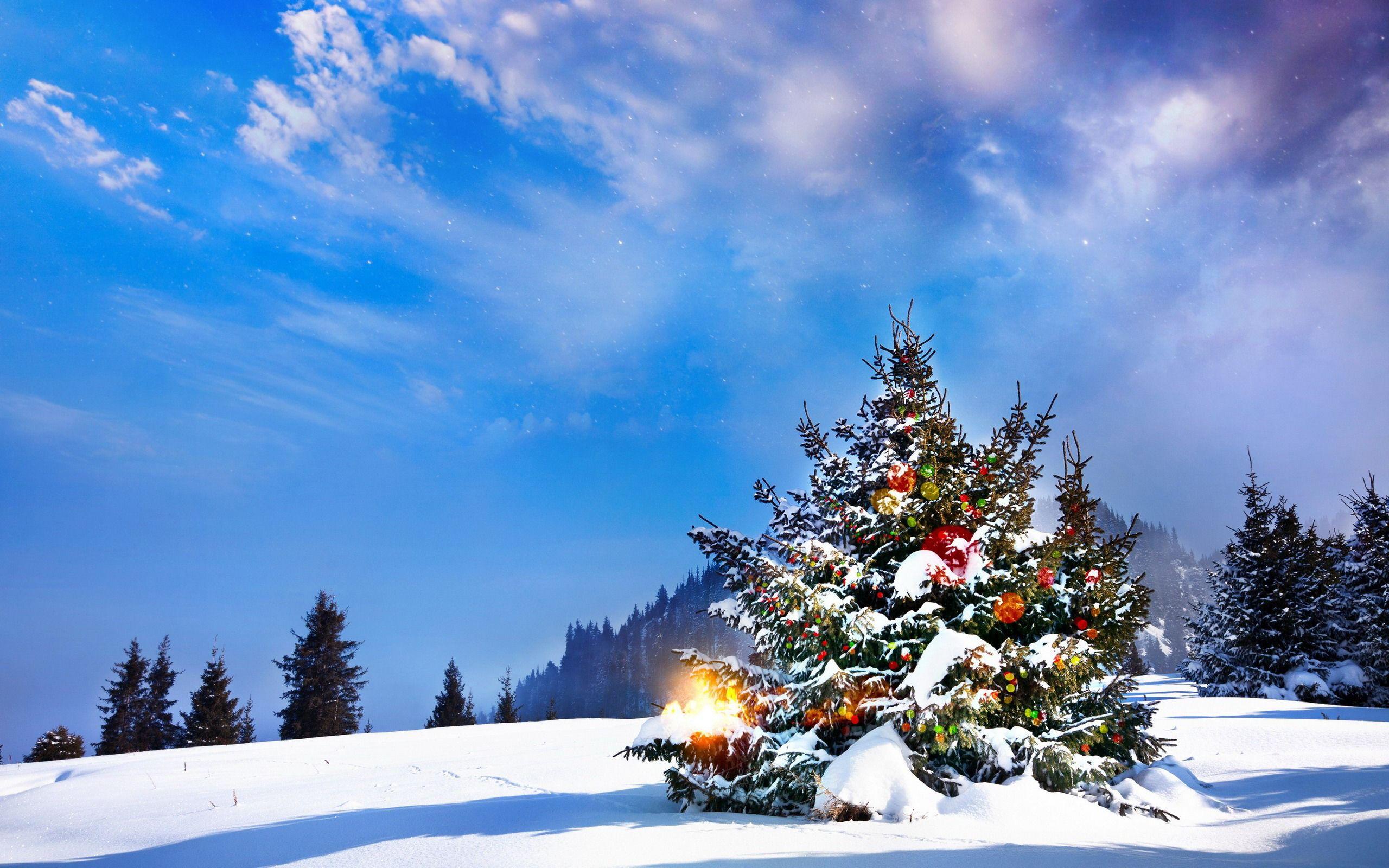 картинки новогоднего леса этого