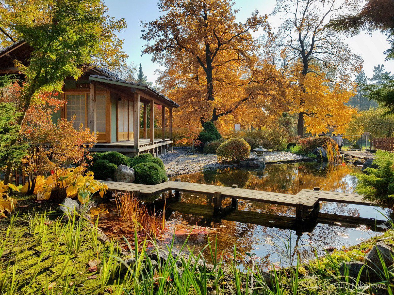 Виртуальный тур по пряничному Ботаническому саду фото 3