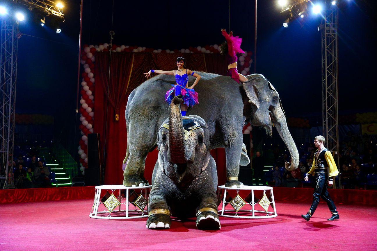 Скачать песню московский цирк