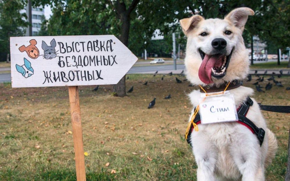 Выставка бездомных животных «Надо брать! Весной!»