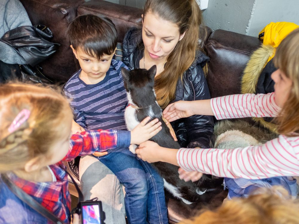 Двухдневный благотворительный фестиваль «Собаки, которые любят» фото 6