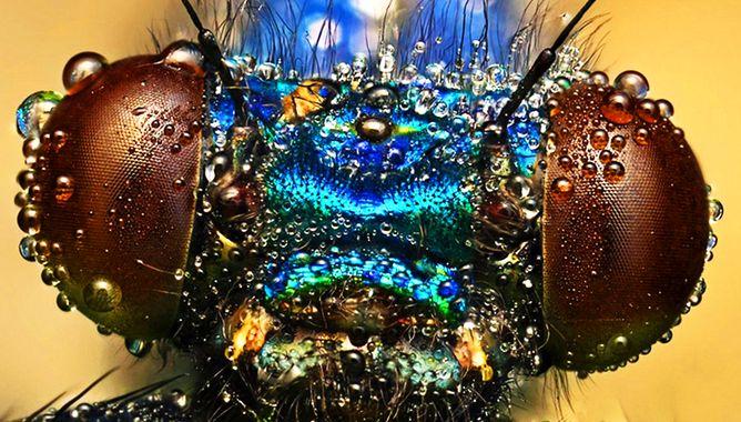 Выставка «Зоопарк под микроскопом»