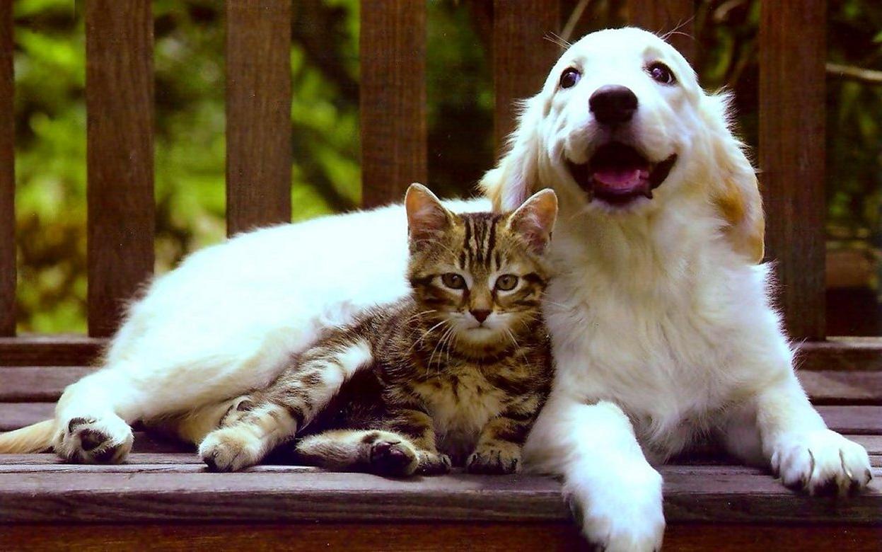 Картинки собачек кошек