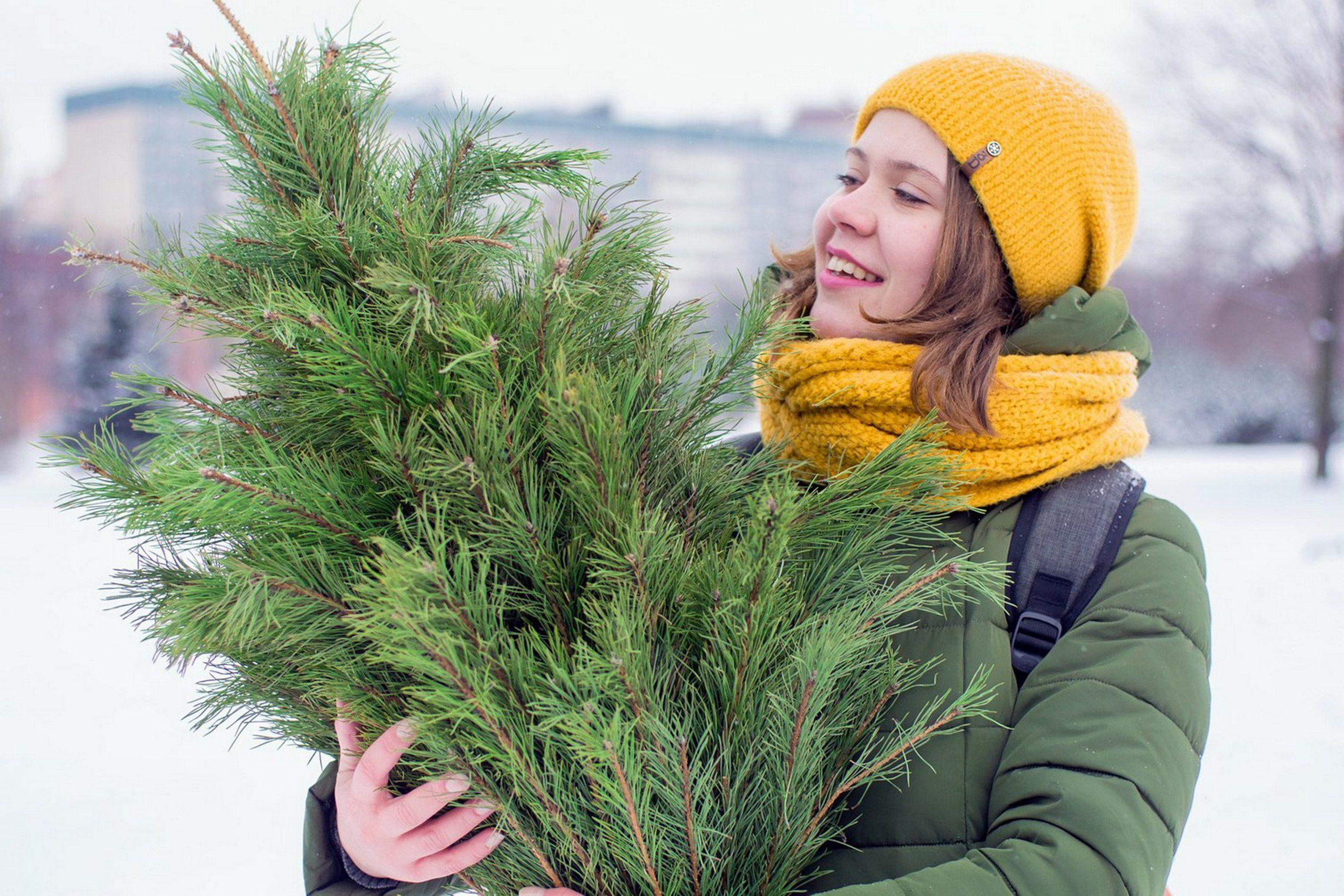 Польза хвои, или куда деть елку после праздников?