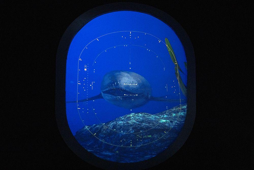 Интерактивная мультимедийная выставка «Океан юрского периода» в «Москвариуме» фото 3