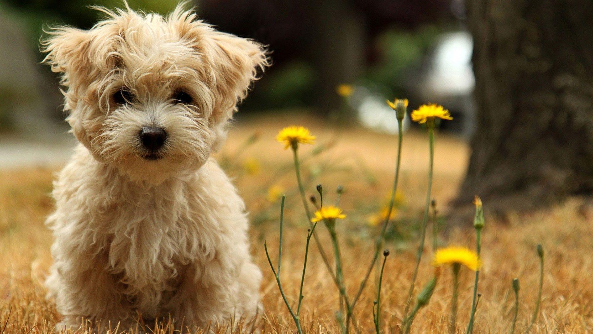 милые собаки  № 688059  скачать
