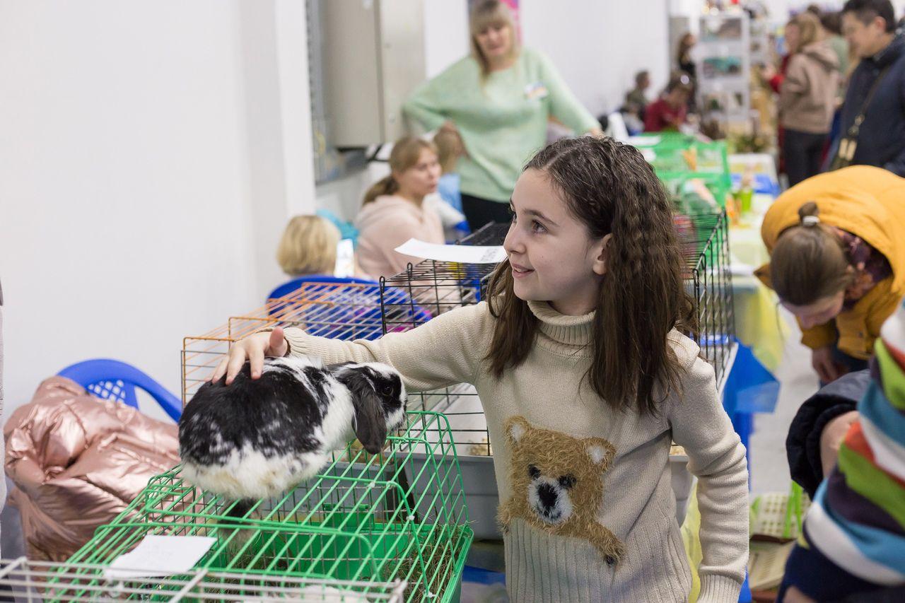 Выставка домашних животных «Усатые звёзды» фото 2